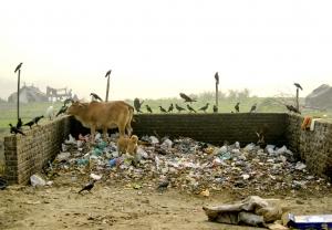 Majnu ka tilla, Delhi