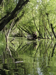 Dal Lake, Srinigar, Kashmir