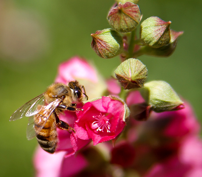 Bee - Eugene, OR - Barbara Raisbeck Photography