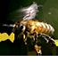 bee extract - bee_extract