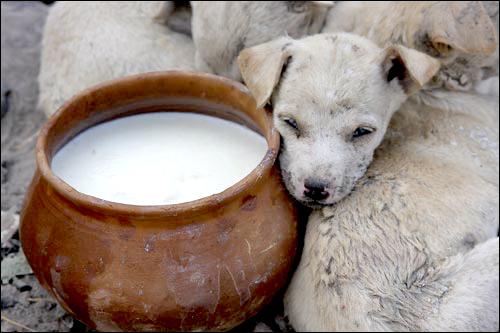 Varanasi Street Dog - India - Barbara Raisbeck Photography